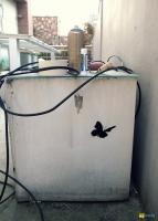 27_butterfly550.jpg